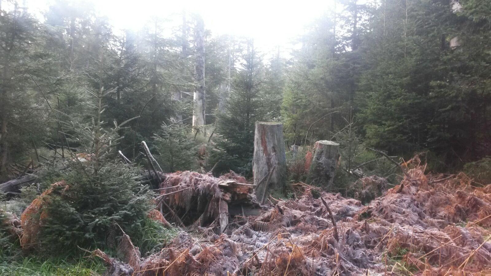 Auf dem Weg zur Grünhütte und am Wildsee vorbei Totholz im Bannwald
