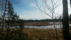 Kaltenbronn Naturschutzgebiet