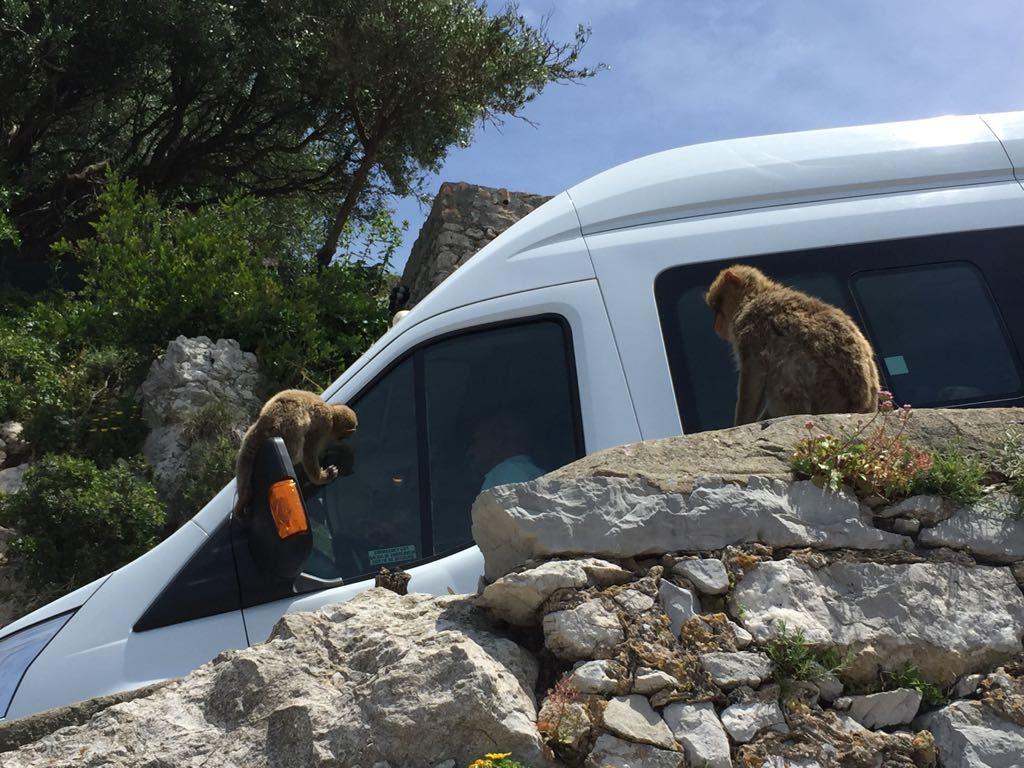 Die Affen haben unseren Bus auf dem Felsen von Gibraltar erobert