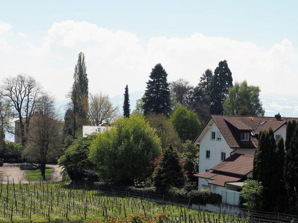 Aussicht von unserer Ferienwohnung auf dem Weingut Deufel in Lindau am Bodensee