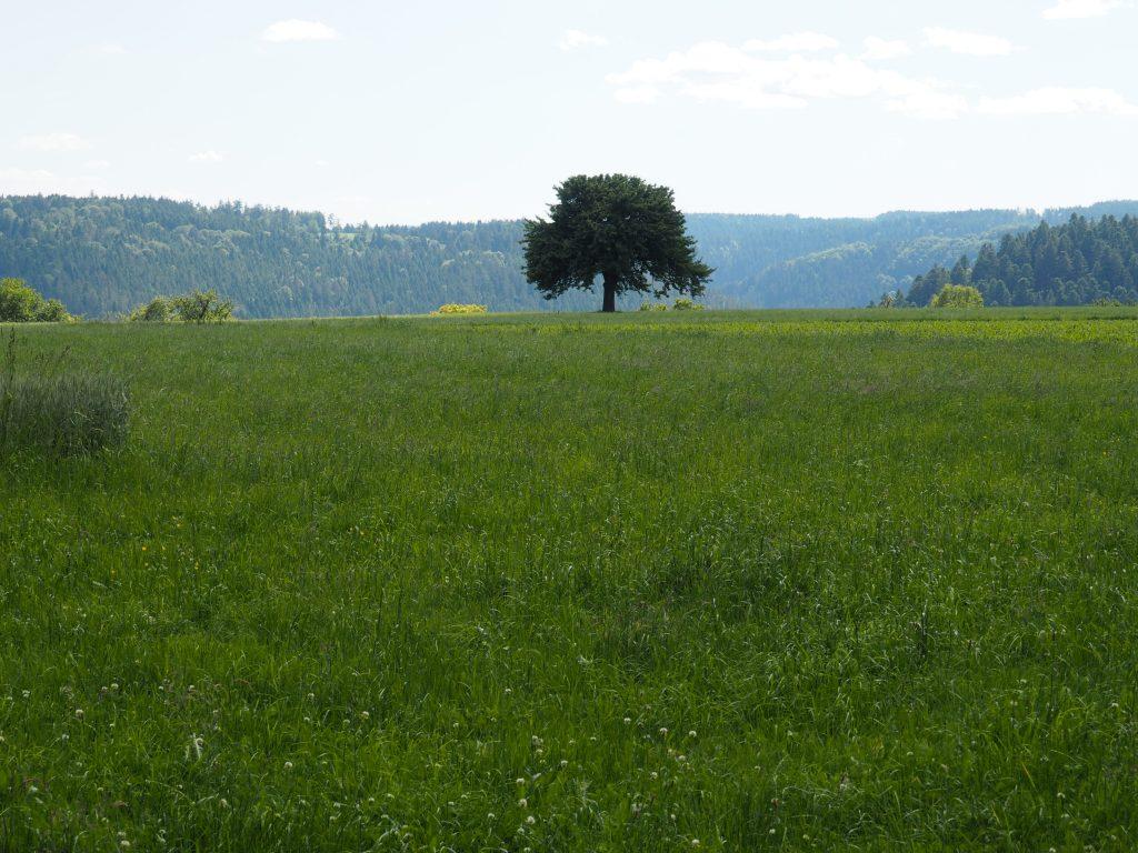 Der angeblich schönste Zaun von Zavelstein, entdeckt bei meiner kulinarischen Wanderung im Teinachtal