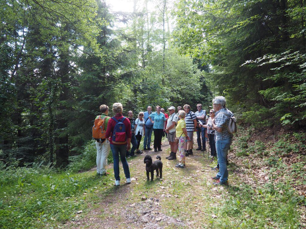 Kleine Verschnaufpause beim Abstieg von Zavelstein nach Bad Teinach bei meiner kulinarischen Wanderung im Teinachtal