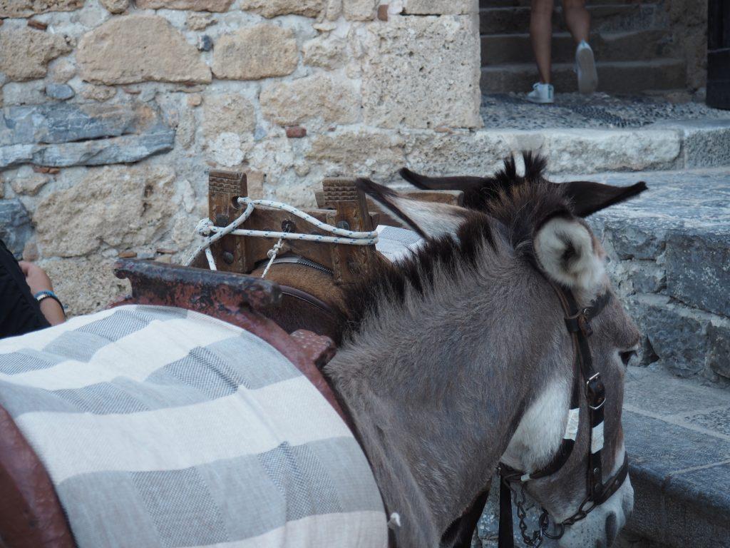 Eseltaxi zur Akropolis in Lindos auf Rhodos