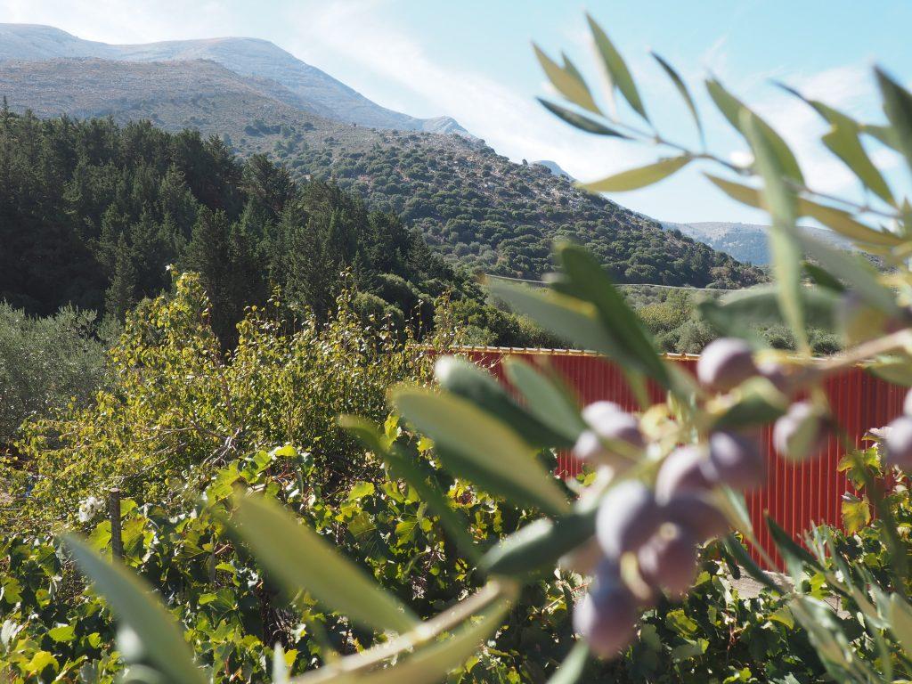 Blick auf den höchsten Berg von Rhodos, den Attaviros