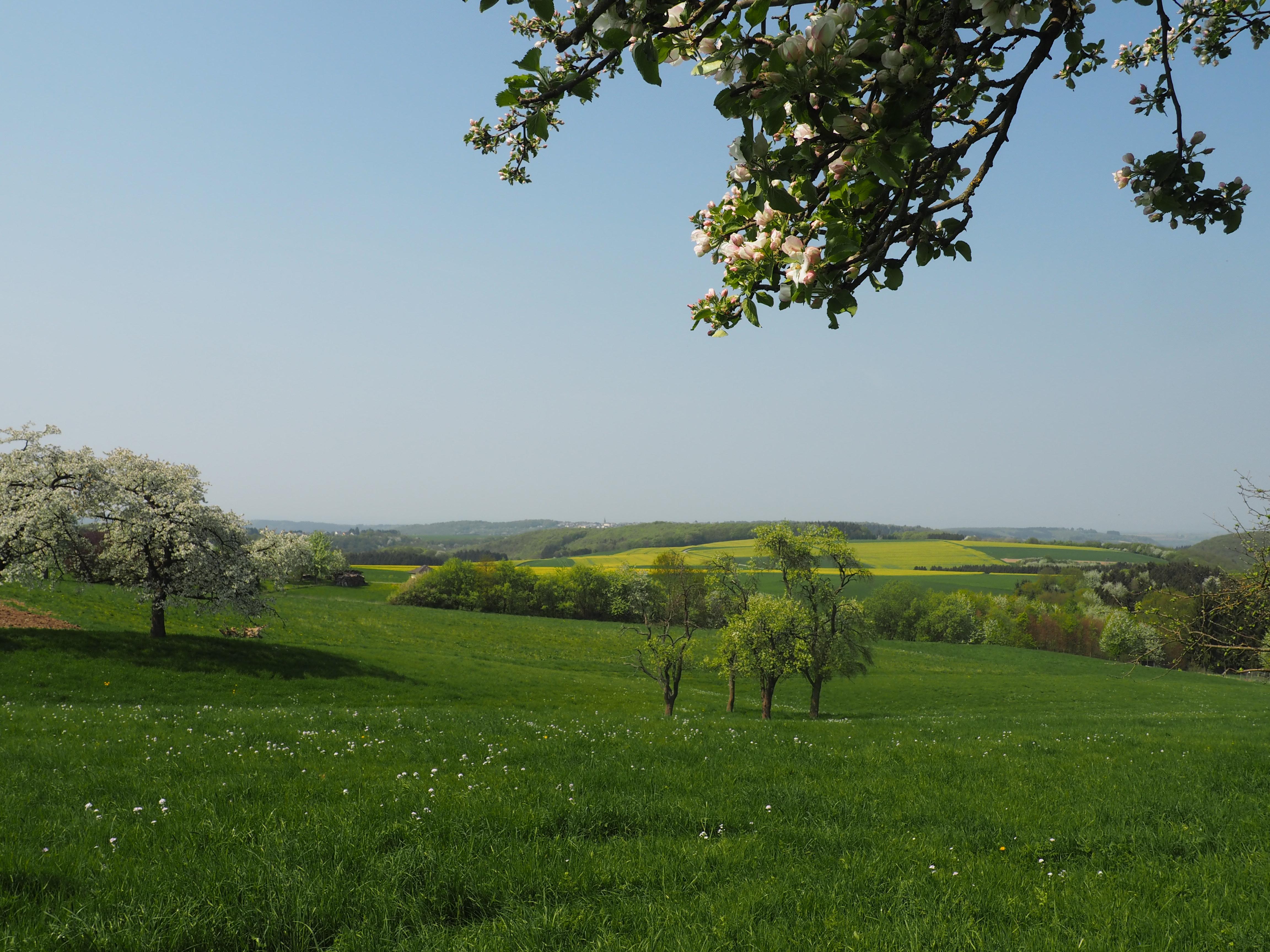 Wunderschöner Ausblick über den Hunsrück im Frühling bei unserer Wanderung durch die Ehrbachklamm