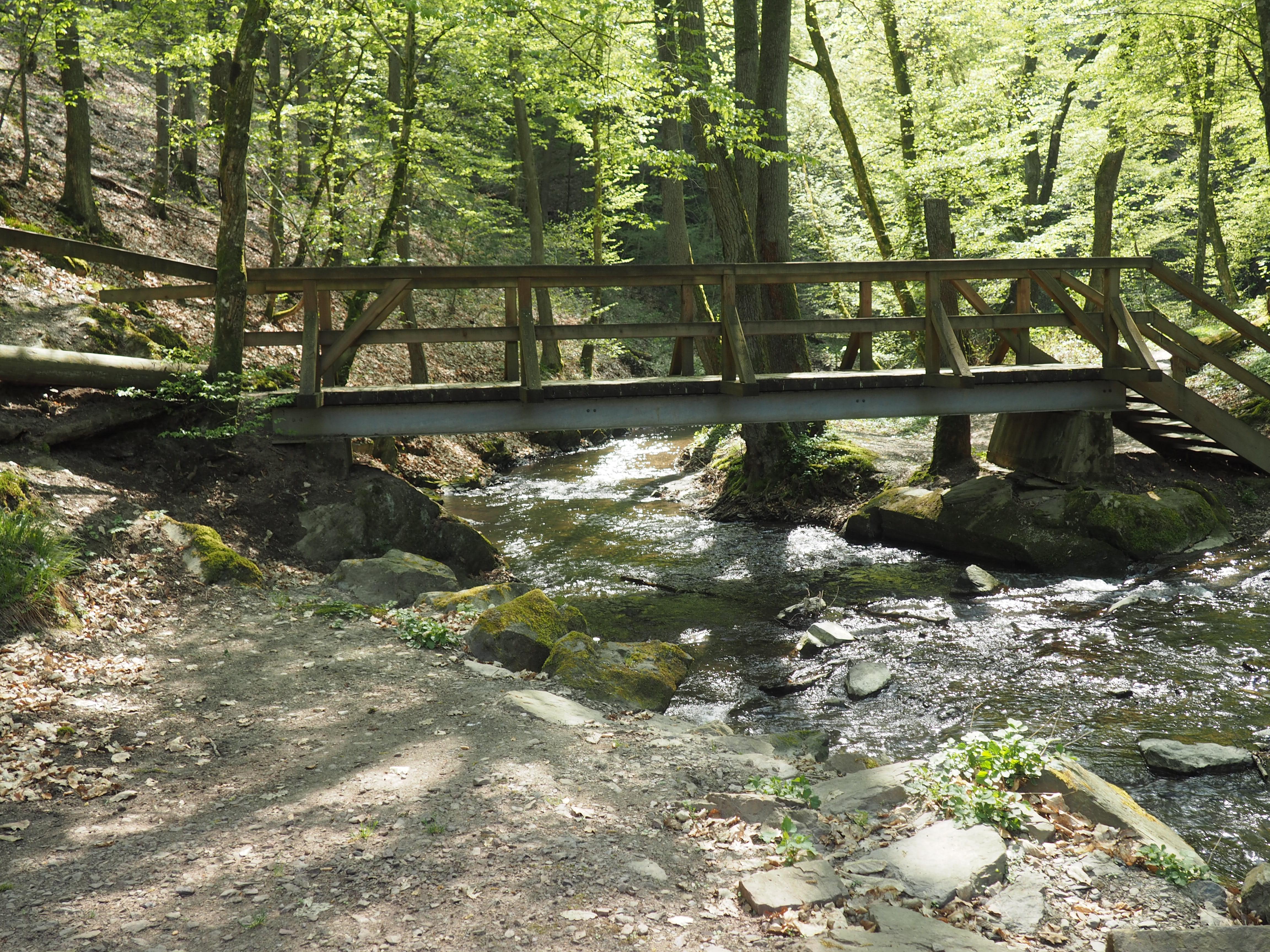 Impressionen von der wildromantischen Ehrbachklamm in der Nähe von Brodenbach an der Mosel