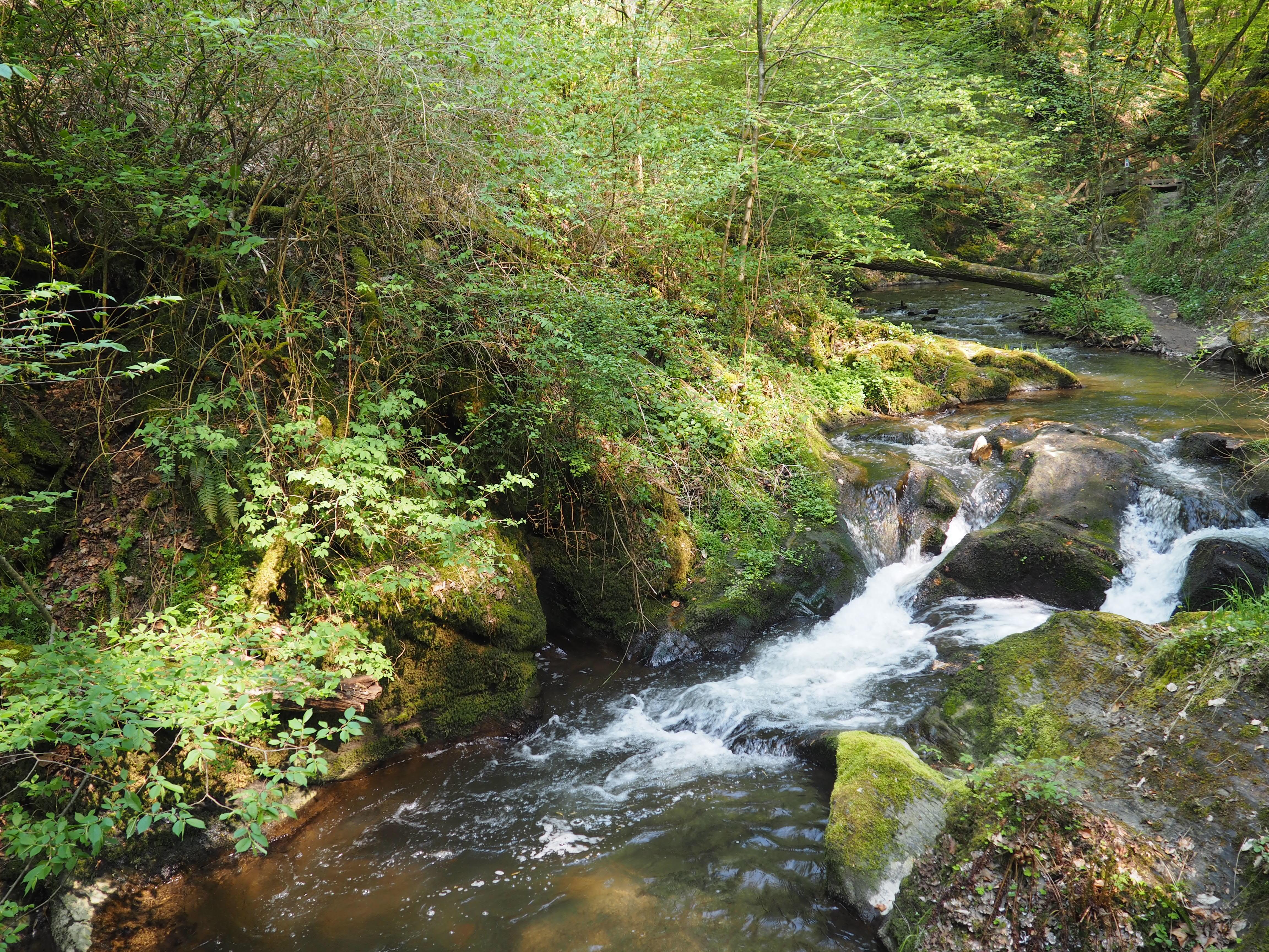 Wandern durch die wildromantische Ehrbachklamm