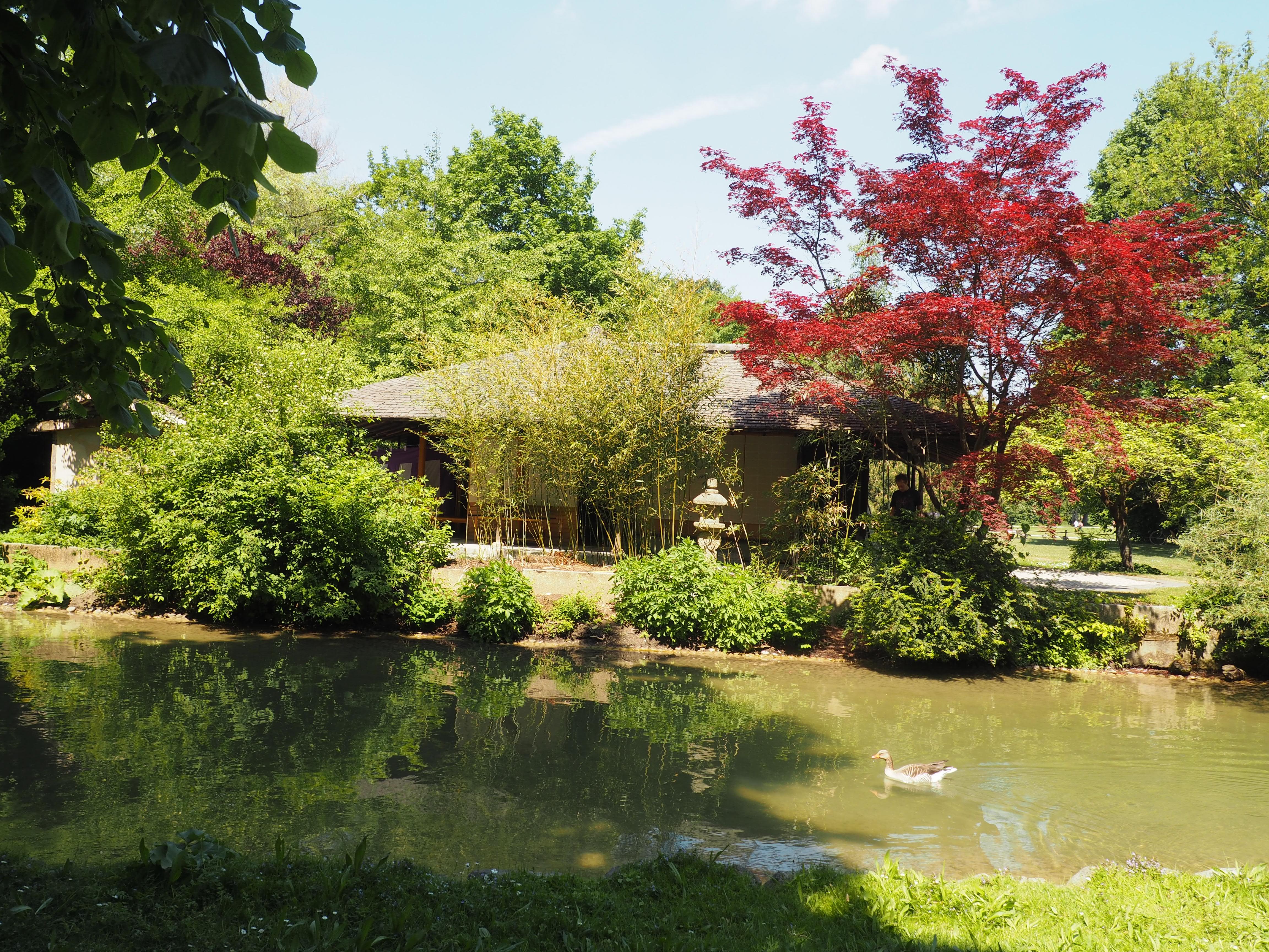 Hier finden ab und an Teezermonien statt: Japanisches Teehaus im englischen Garten in München