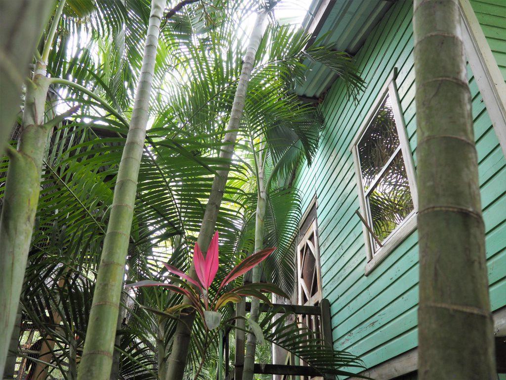 Karibisches Flair in Viktors Monkey Farm, entdeckt während unserem Ausflug auf eigene Faust auf Roatan