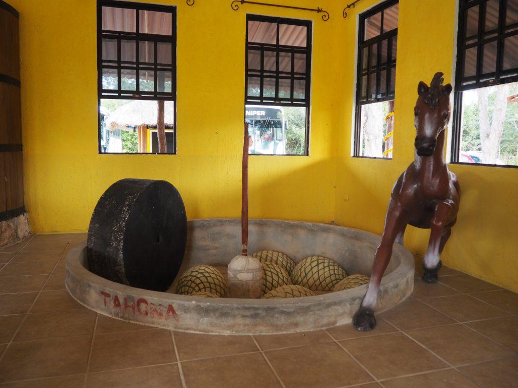 Kleines Museum auf der Tequila-Farm auf Cozumel, Kreuzfahrtausflug