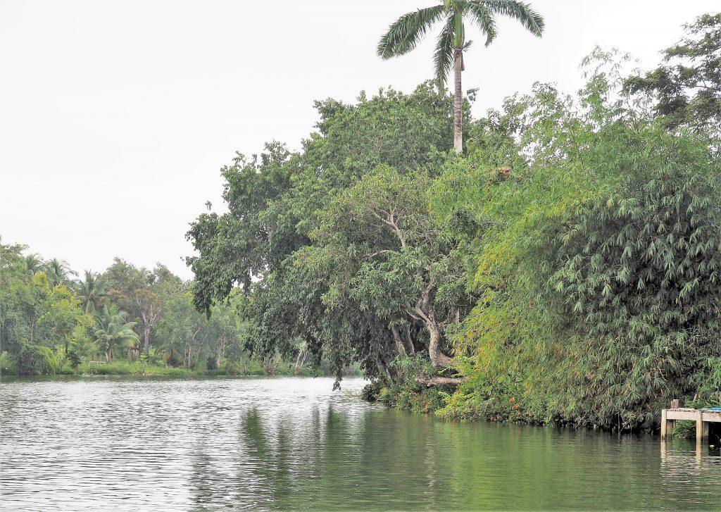 Üppige tropische Vegetation am Old Belize River, bei unserem Kreuzfahrtausflug