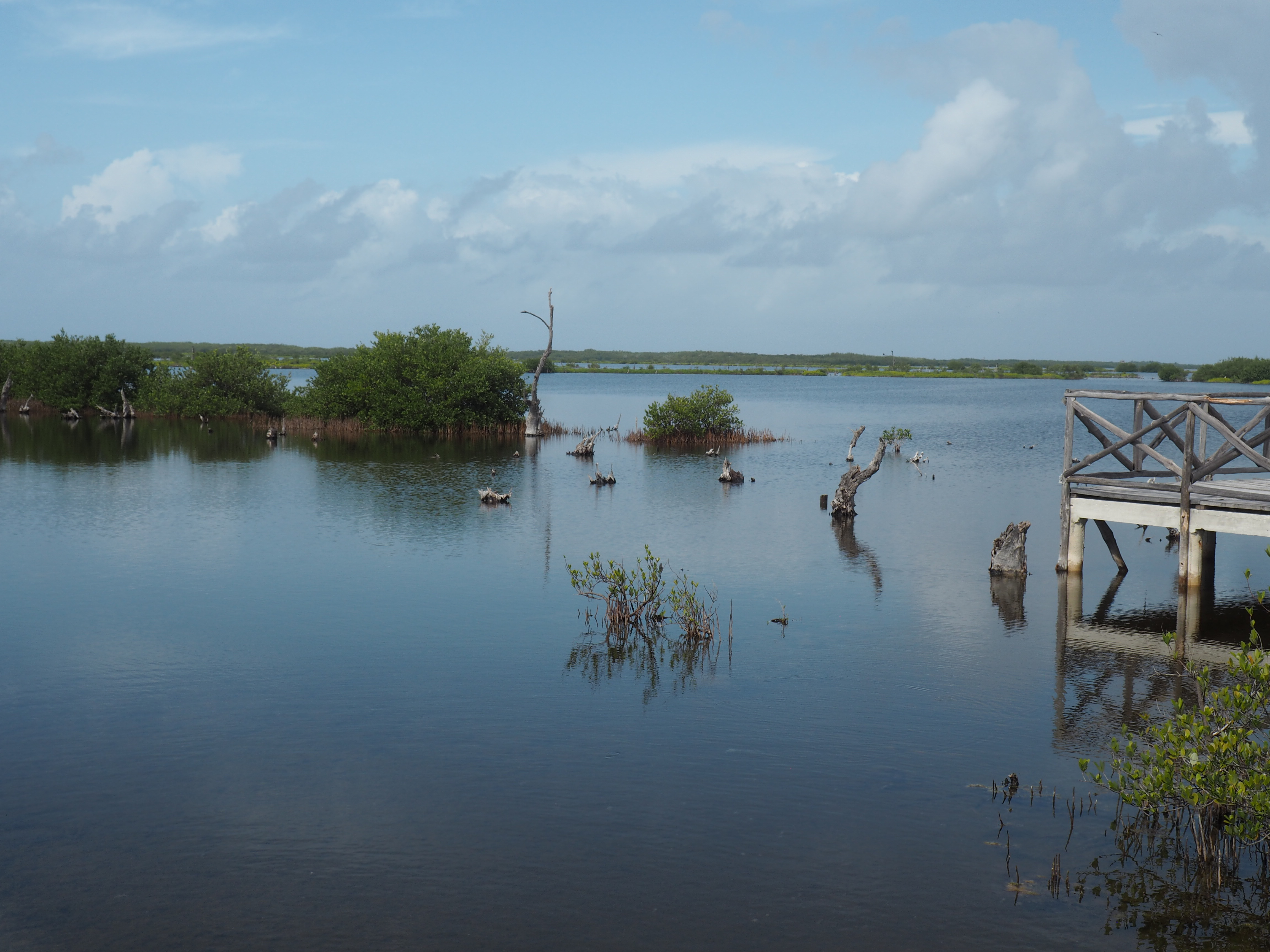 Naturschutzgebiet auf Cozumel