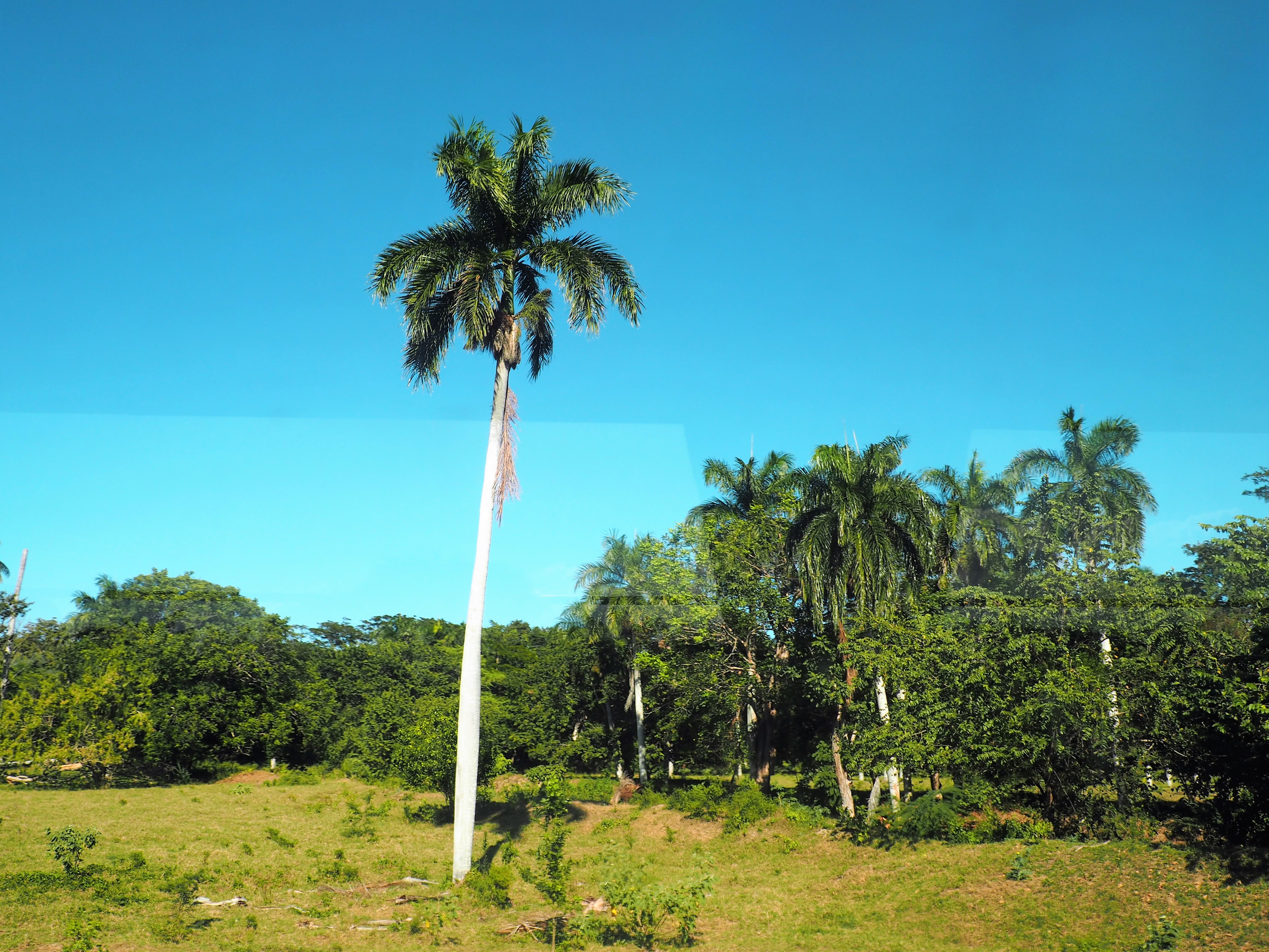 Palmenhain auf der Fahrt durch das Landesinnere der Dominikanischen Republik