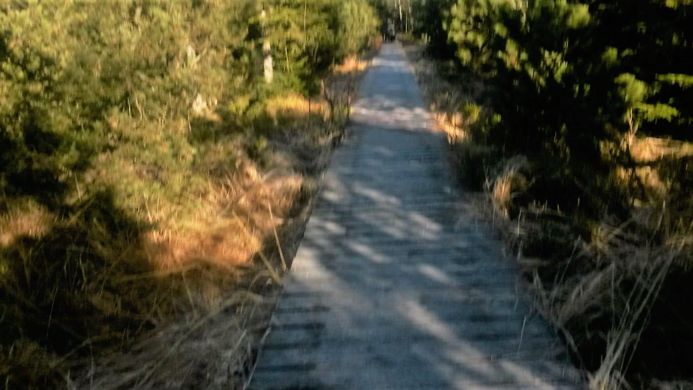 Bohlenweg durch das Hochmoor am Wildsee Richtung Grünhütte