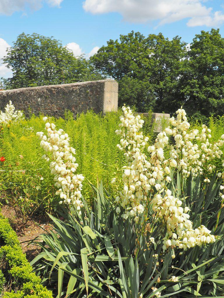 Impressionen vom Klostergarten des Klosters Frauenberg in Fulda