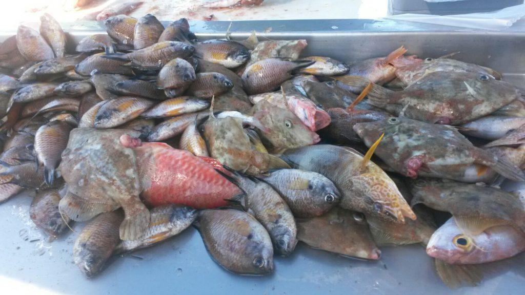 Fangfrischer Fisch wird direkt an der Uferpromenade von Lanzarote angeboten beim Kreuzfahrt Ausflug auf eigene Faust