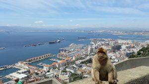 Berberaffen auf dem Felsen von Gibraltar mit herrlicher Aussicht auf den Hafen