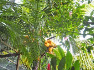 Tropische Vegetation auf Roatan