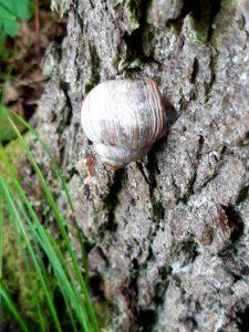 Schnecke am Baumstamm