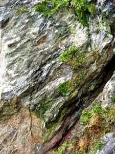 Granitfelsen Waldgesundheitstherapie Bad Neualbenreuth