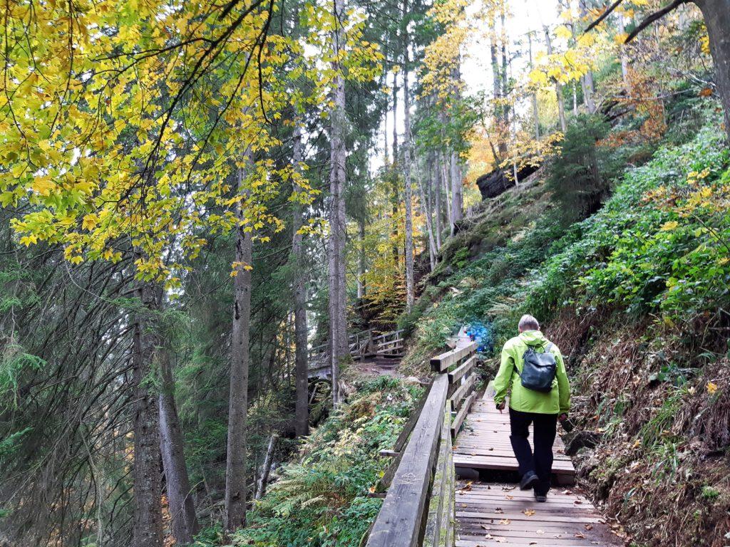 Wanderung Sankenbachsteig Baiersbronn