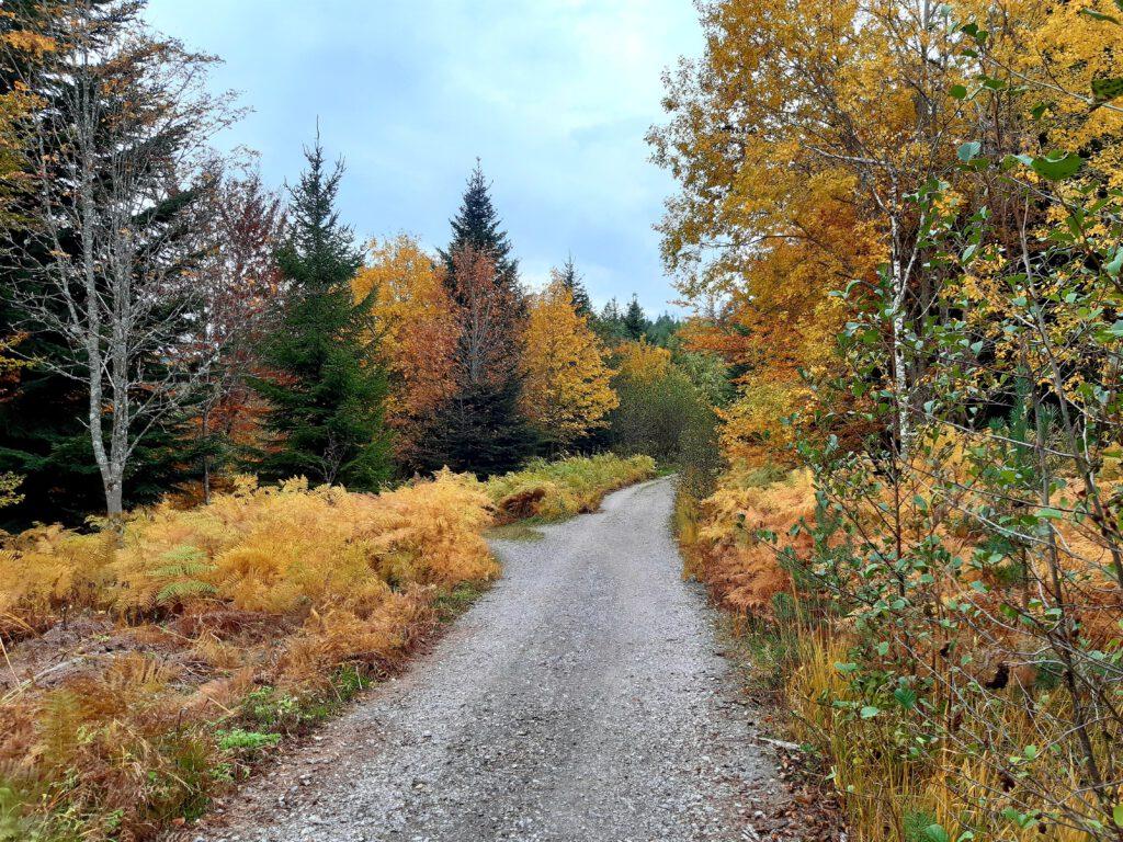 Genießerpfad Baiersbronn