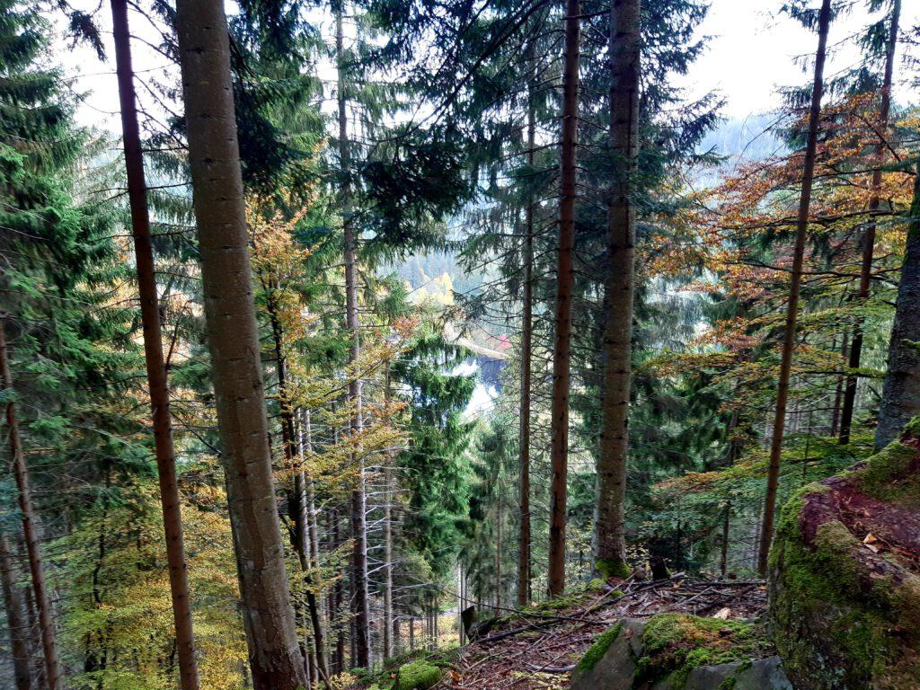 Aussicht auf den Sankenbachsee