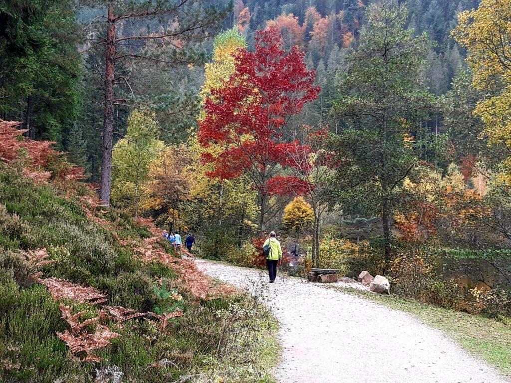 Genießerpfad Sankenbachsteig Baiersbronn