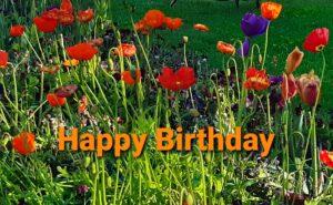 Bloggergeburtstag Happy Birthday
