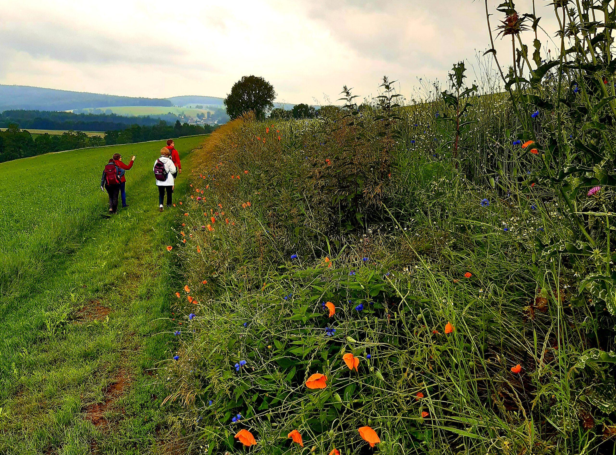 Wandern in Bad Neualbenreuth in der Oberpfalz
